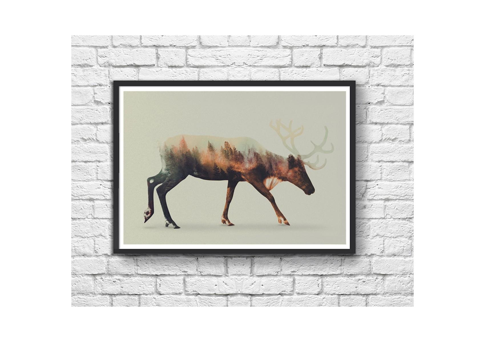 poster renne reindeer andreas lie 70 x 50 cm. Black Bedroom Furniture Sets. Home Design Ideas